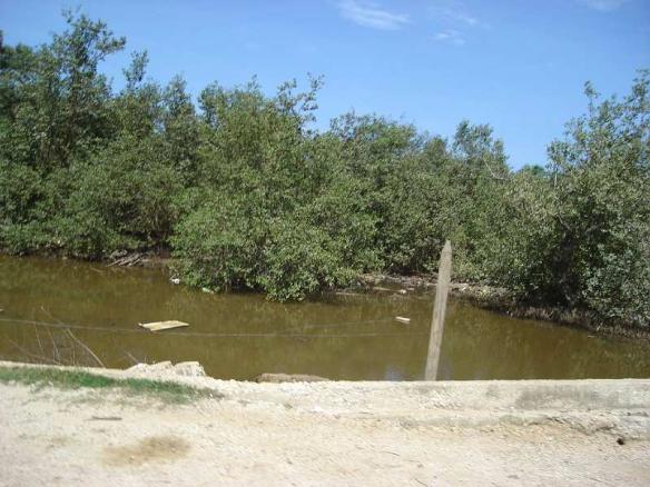Borde de la carretera de acceso al Rincón, aguas del manglar con poco flujo, solo un puente comunicante con la otra parte subdividida del manglar.