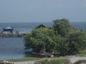 Los manglares tienen raices aéreas, las casas pueden también tenerlas.